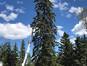 Buck Tree Service